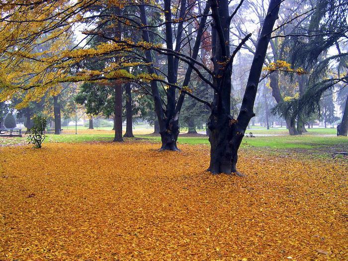 Посакајте и добредојде на есента