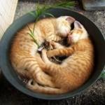 Рајскиот живот на мачињата