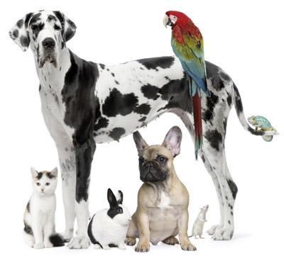 Што кажува миленичето за вашата работа?