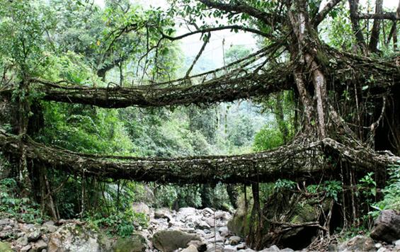 Живите мостови во Индија