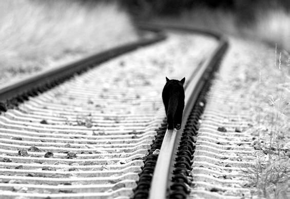 Неверојатни црно-бели фотографии