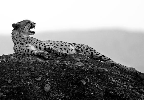(17) Неверојатни црно-бели фотографии
