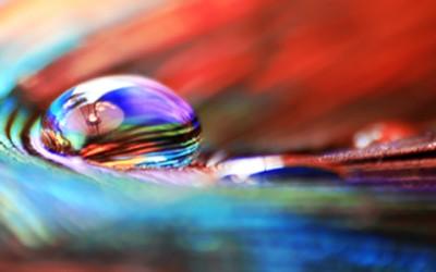 Боите на природата во макрофотографија