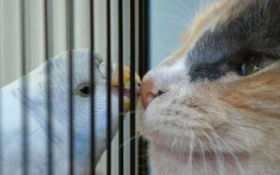 Кога мачето го сака папагалчето...