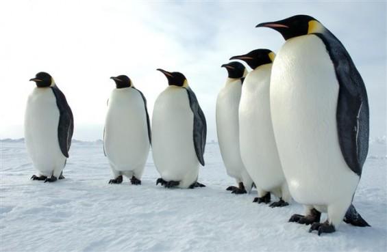 8 факти за пингвините