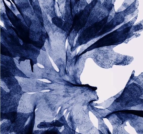 рентген слики од цвеќиња