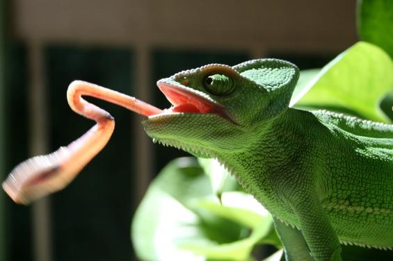 Неколку чудни и интересни факти за животните 2