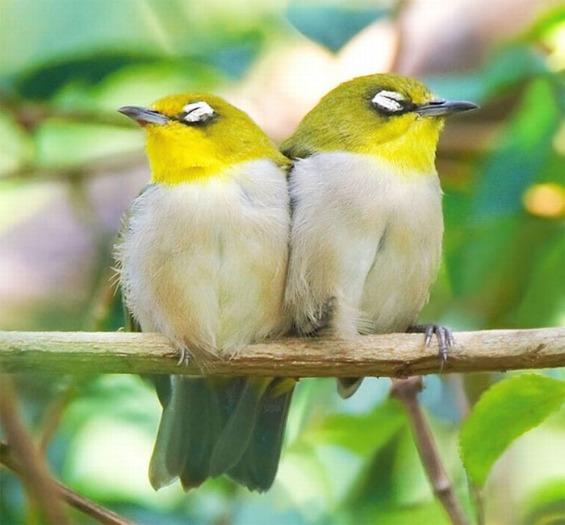 птици-гласници на пролетта