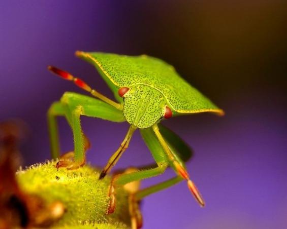 минијатурниот свет на инсектите
