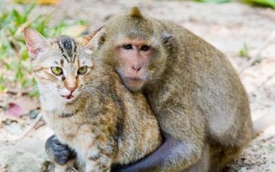 чудна љубов помеѓу мајмун и мачка