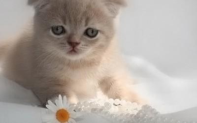 Најслатките мачиња