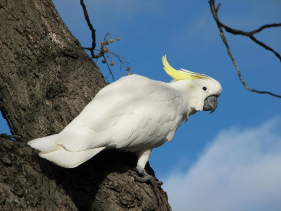 Топ 10 најубави птици во светот