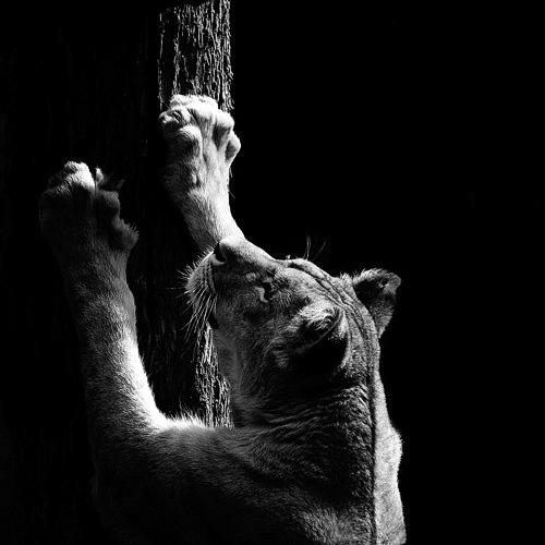 (12) Темната зоолошка