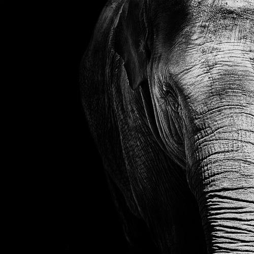 (13) Темната зоолошка