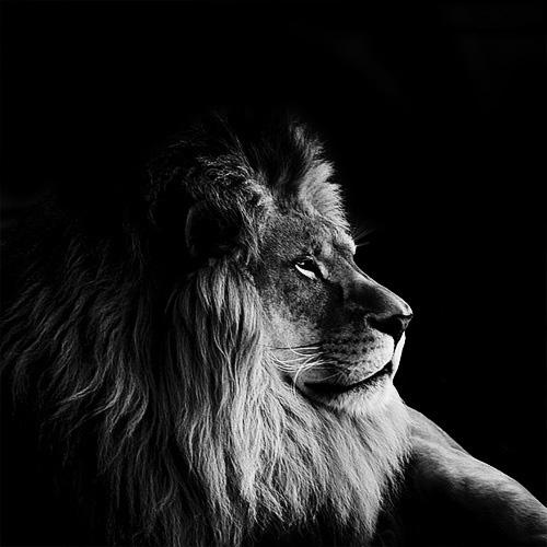 (14) Темната зоолошка