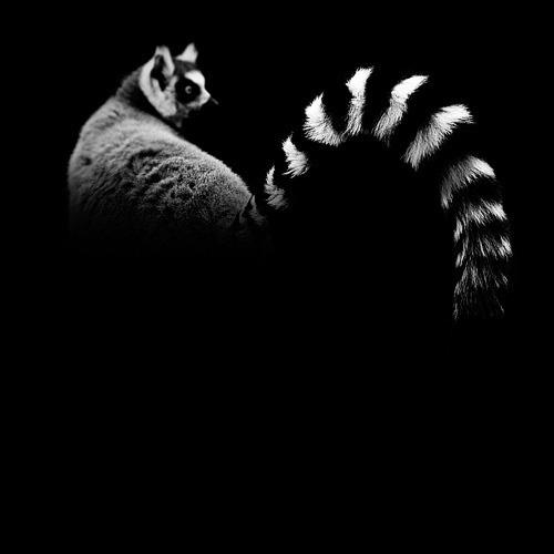 (3) Темната зоолошка