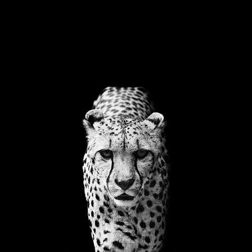(6) Темната зоолошка