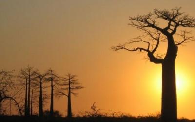 волшебни и чудни дрва