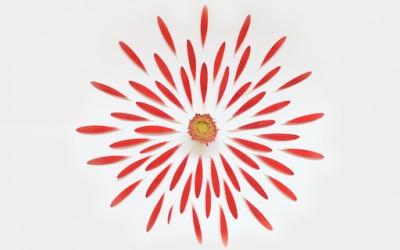 Цвеќиња кои експлодираат