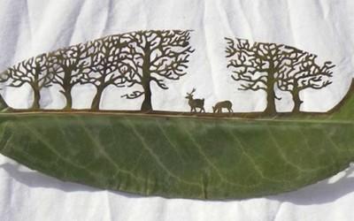 Ливчиња од дрвја кои раскажуваат приказни