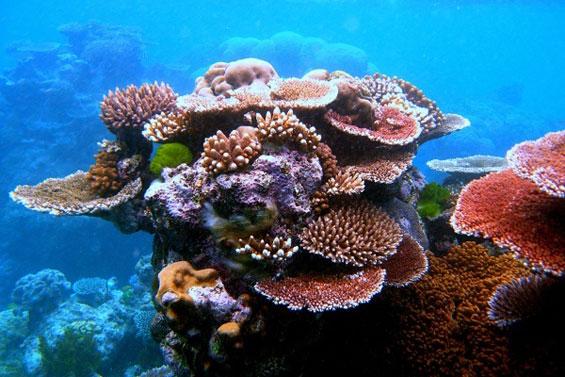 Неверојатниот морски свет во Големиот корален гребен