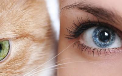 Астрологијата и вашето омилено милениче