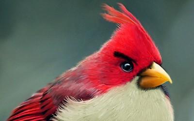 """Кога """"Angry birds"""" би биле вистински птици..."""