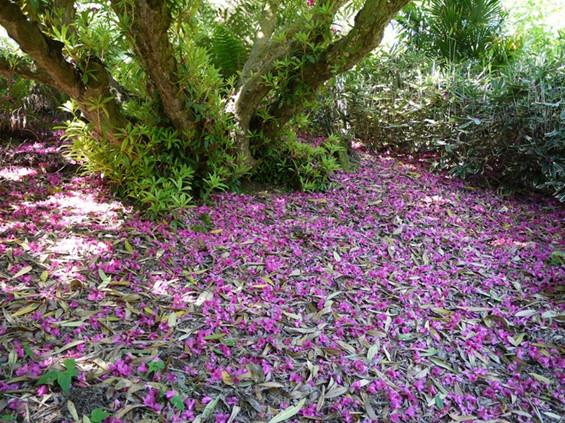Загубените ботанички градини