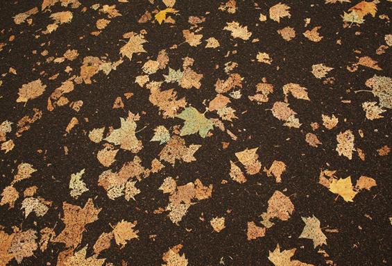 Тепих од паднати есенски лисја
