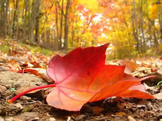 Оваа есен
