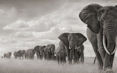 Дивиот свет на Африка низ фотографии