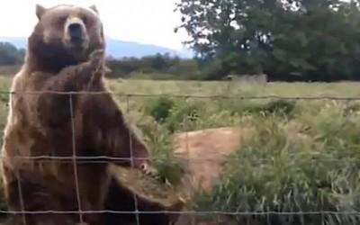 Културна мечка која ви мавта за топло добредојде