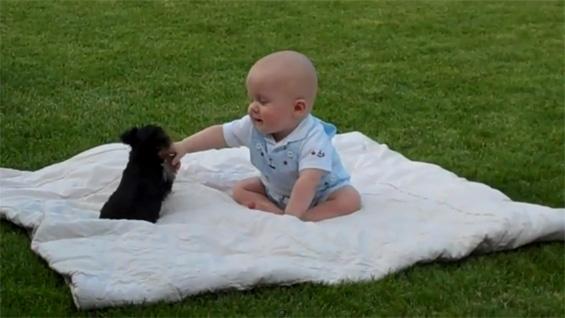 """Кутре """"напаѓа"""" бебе на пикник"""