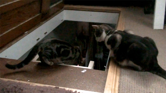 Мачиња ја истражуваат визбата на сопственикот