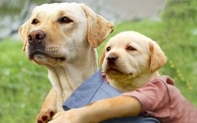 Кога кучињата би се бореле за Оскар