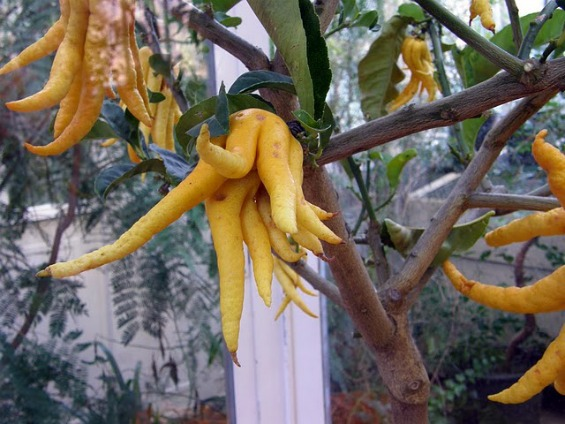 10 најчудни овошја во светот