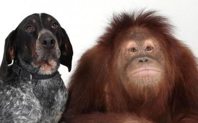 Верното пријателство помеѓу кучето Роско и орангутанот Сирија