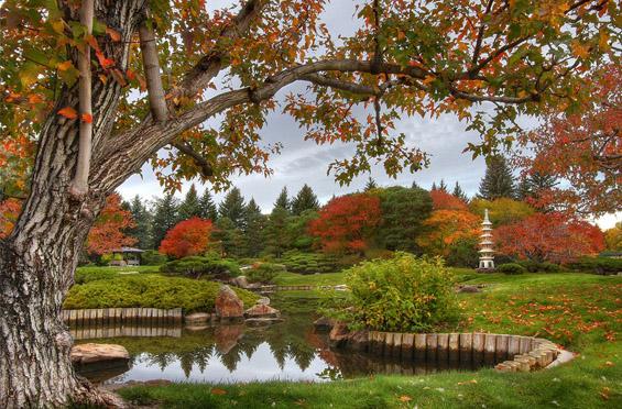 """Јапонската градина """"Ника Јуко"""" – вистински рај на Земјата"""