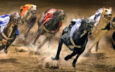 Најбогатите животни-спортисти