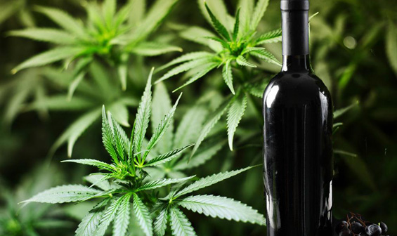 Вино од марихуана