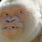 Чудо на природата - неверојатни албино животни