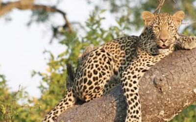 Специфичниот див свет на Африка