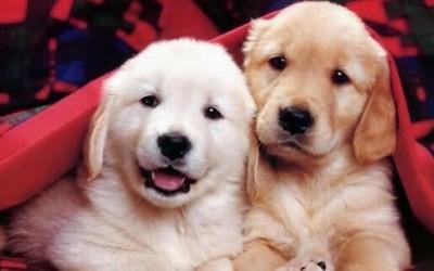 Интересни и необични факти за кучињата