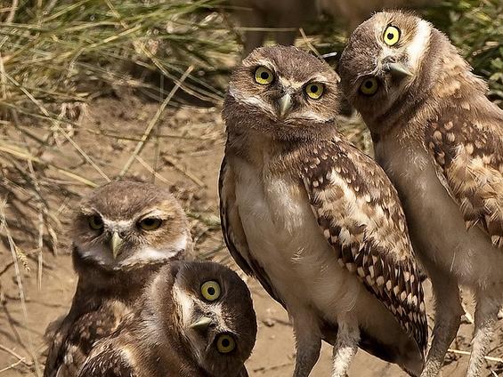 Моќта на фотографијата во животинскиот свет