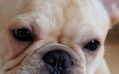 Изборот на кучето го открива карактерот на луѓето