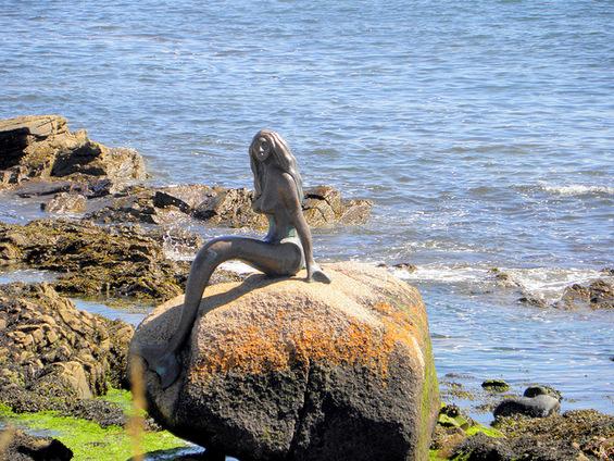 """Малите сирени кои """"живеат"""" на бреговите"""