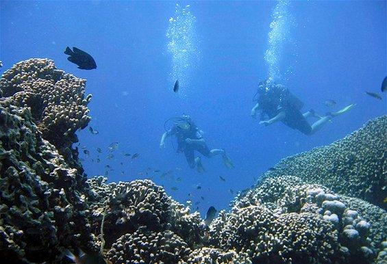 Суштества од коралните гребени