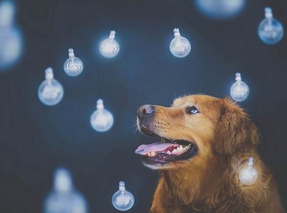 17 годишна девојка прави слатки фотографии со нејзините кучиња
