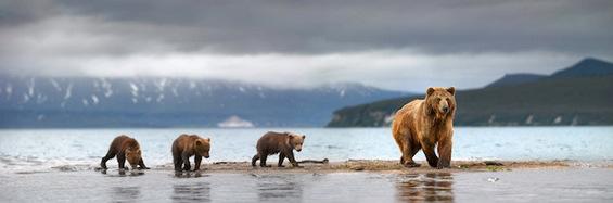 Како се забавуваат мечките во Русија?