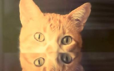 Водич за поквалитетен живот од слаткото маче Бретон